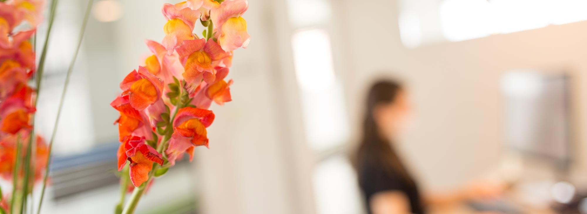 Mit Blumen ausgestatteter Empfangsbereich der Zahnarztpraxis im Wengentor in Ulm